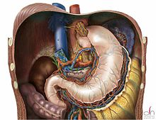 A completed Nissen fundoplication.